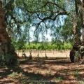 Willowsporn – 09