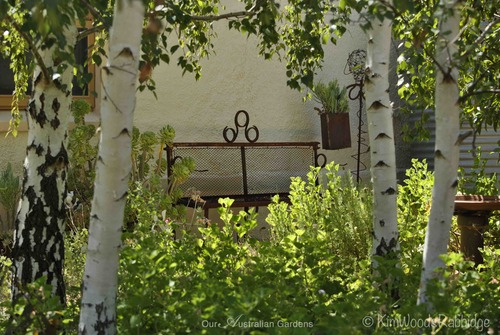 A grove of birch trees protects one of the cottages from afternoon sun.