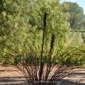 Willowsporn – 27
