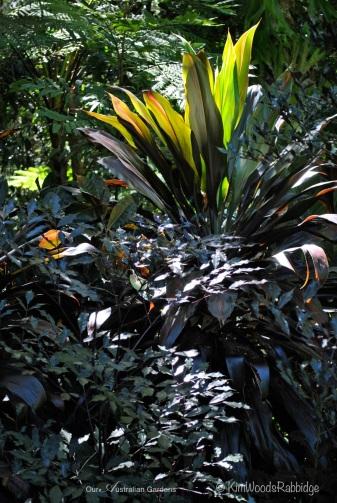 Black cordylines in the 'black' garden bed.