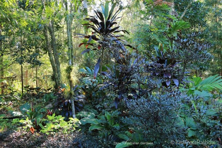 Black foliage Stringybark©KimWoodsRabbidge