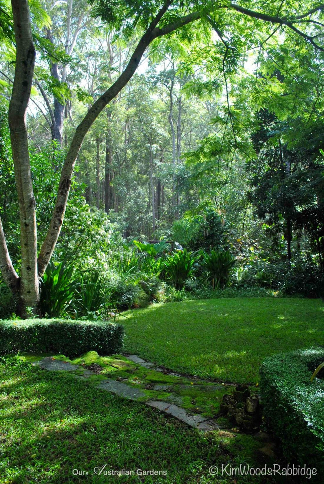 Cassia javanica Stringybark©KimWoodsRabbidge-Our-Australia-Gardens