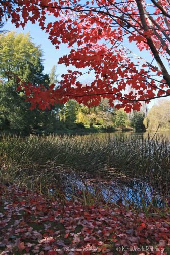 Culzean14©KimWoodsRabbidge-Our-Australian-Gardens