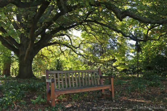 Sprawling limbs of this grand old oak shade a bench overlooking the croquet lawn.
