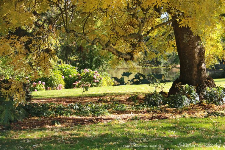 Culzean31©KimWoodsRabbidge-Our-Australian-Gardens