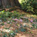 Culzean5©KimWoodsRabbidge-Our-Australian-Gardens