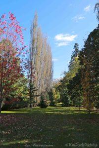 Culzean©KimWoodsRabbidge-Our-Australian-Gardens