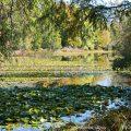 Cuylzean9©KimWoodsRabbidge-Our-Australian-Gardens