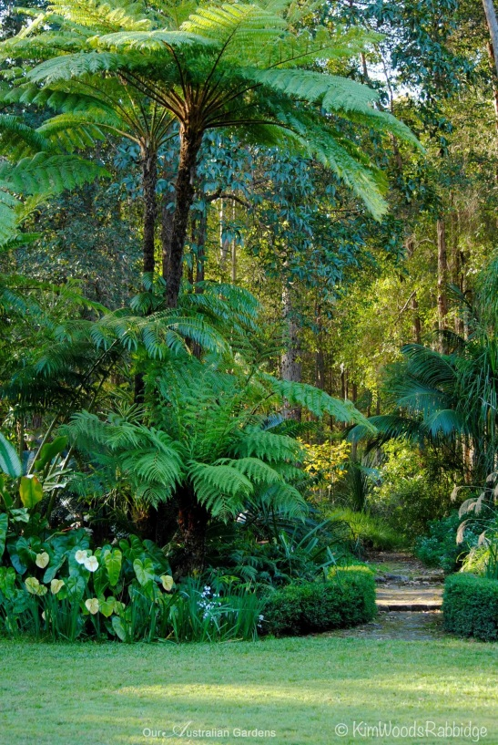 A middle story of grand Dikonsonia antartica shelter smaller ferns and anthuriums.