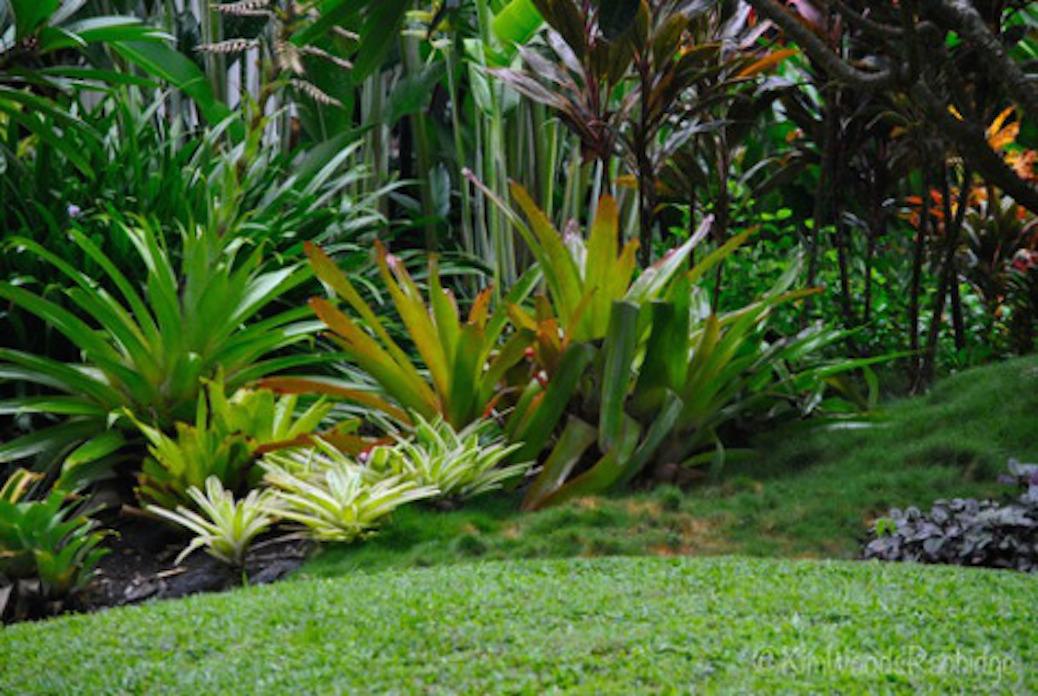incredible tropical garden brisbane | 'Tabu' Queensland – Our Australian Gardens