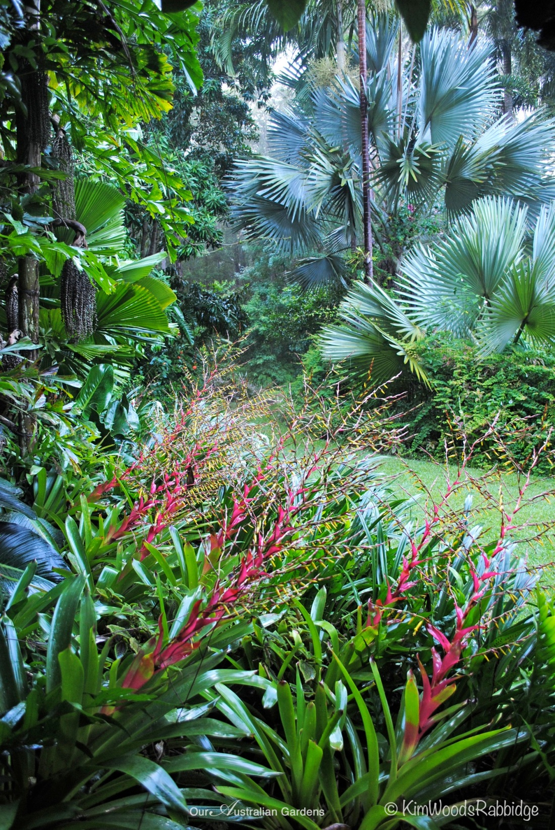 Stringybark bromeliads ©Kim Woods Rabbidge