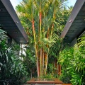 Struthers garden©Kim Woods Rabbidge Our AustralianGardens