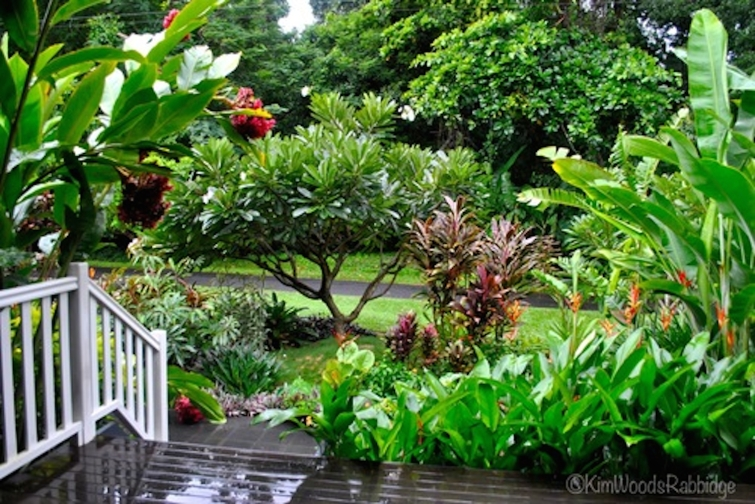 Tabu queensland our australian gardens for Landscape gardeners brisbane