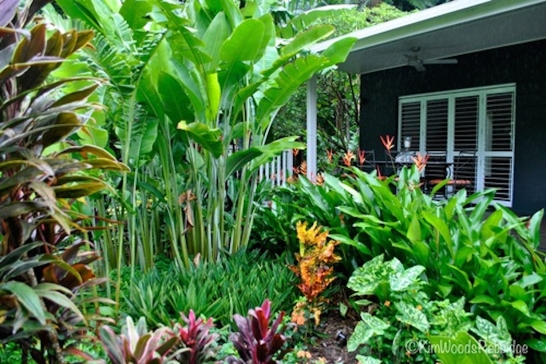 Tabu queensland our australian gardens for Garden designs queensland