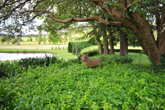 Not so rampaging bull at home beneath the trees.
