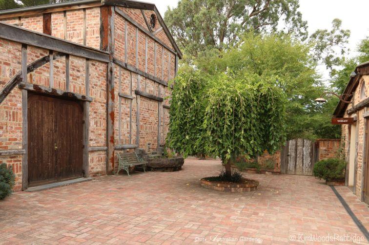 weeping elm in brick courtyard