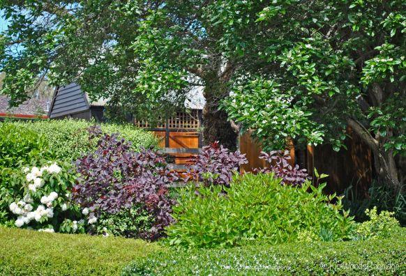 Summer garden©Kim Woods Rabbidge