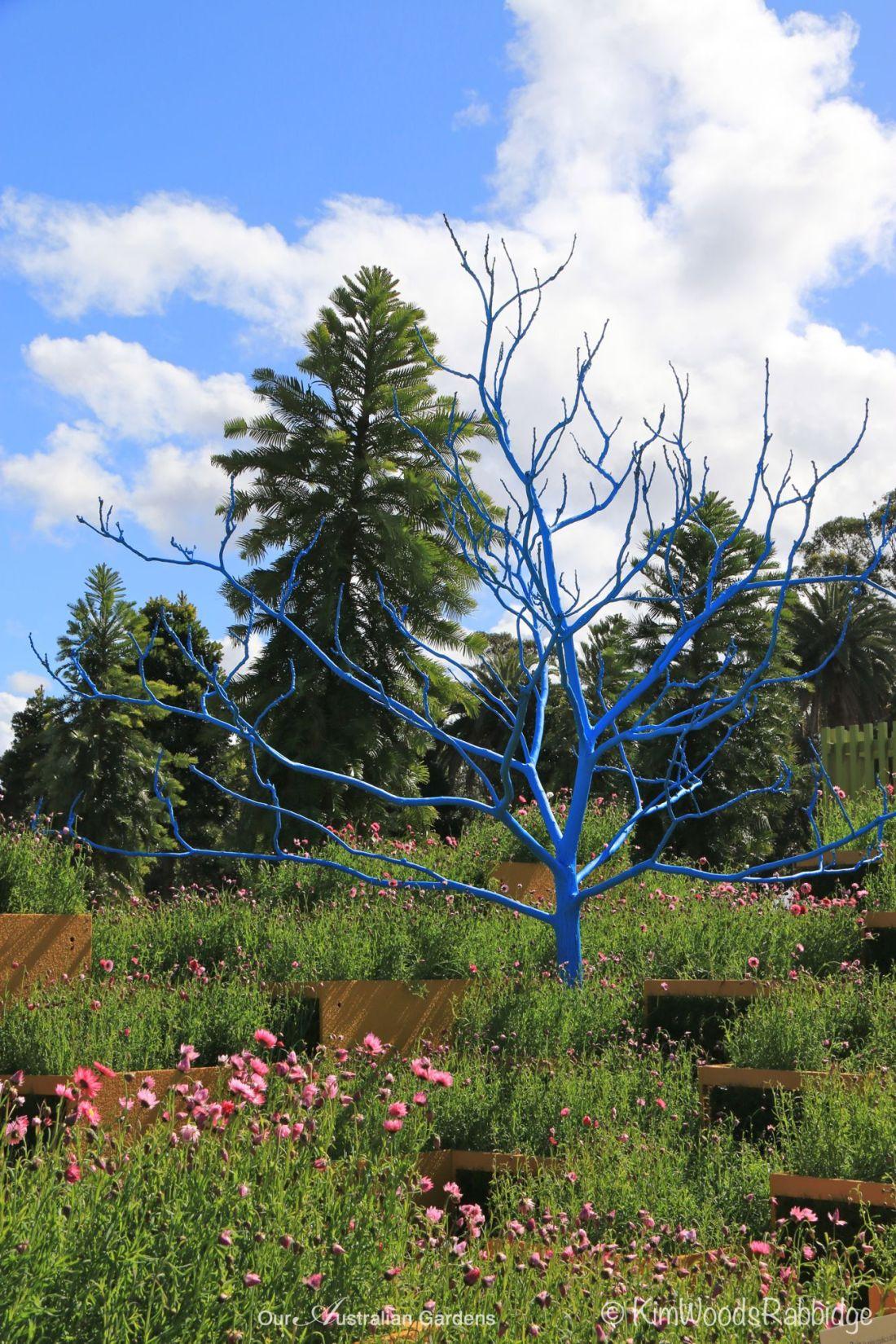 Mini Blue Ruin Australian Garden Show Sydney©Kim Woods Rabbidge