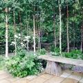 Serene simplicity in the front garden of Helen Dillon's Dublingarden