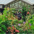 Helen Dillon greenhouse