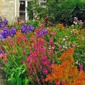 Garden paintbox filled withcolour.