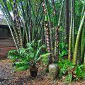 Bamboo ©Kim WoodsRabbidge