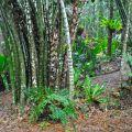 Bamboo culms ©Kim WoodsRabbidge