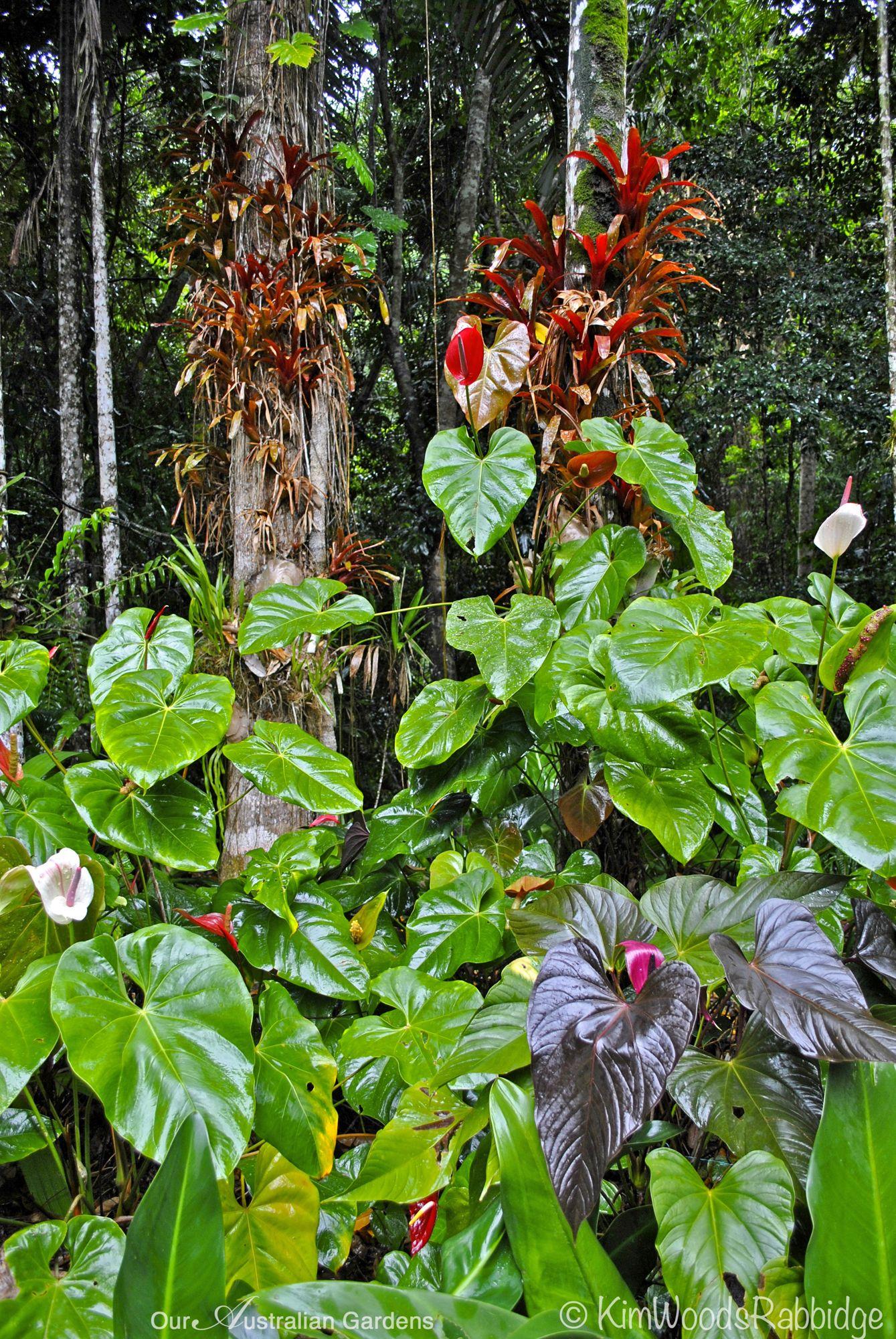 u0027Canopy understory ©Kim Woods Rabbidgeu0027 & Canopy understory ©Kim Woods Rabbidge u2013 Our Australian Gardens