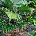 Kuranda palm courtyard ©Kim WoodsRabbidge
