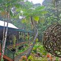 Rainforest dwelling©Kim WoodsRabbidge