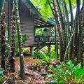 Rainforest house©Kim WoodsRabbidge