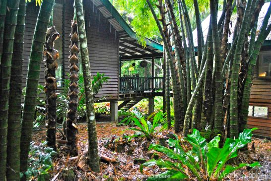 Rainforest house©Kim Woods Rabbidge