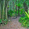 Rainforest walk ©Kim WoodsRabbidge