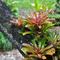Terrestrial bromeliads ©Kim WoodsRabbidge