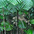 Tree ferns and palm flowers ©Kim WoodsRabbidge