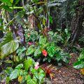 Undestory plants ©Kim WoodsRabbidge