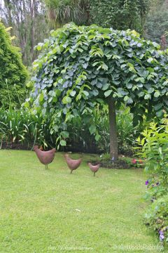 Chooks in queue