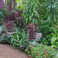Colourful West End garden ©Kim Woods Rabbidge