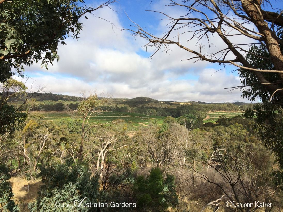 """View of the vines from 'Owl Cottage"""" one of the satellite accommodation homes on the winery."""