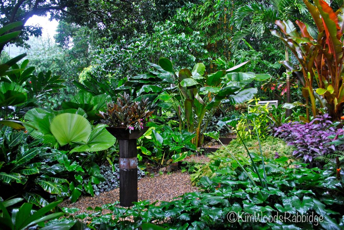 Tropical north queensland garden tour our australian gardens for Landscape gardeners brisbane