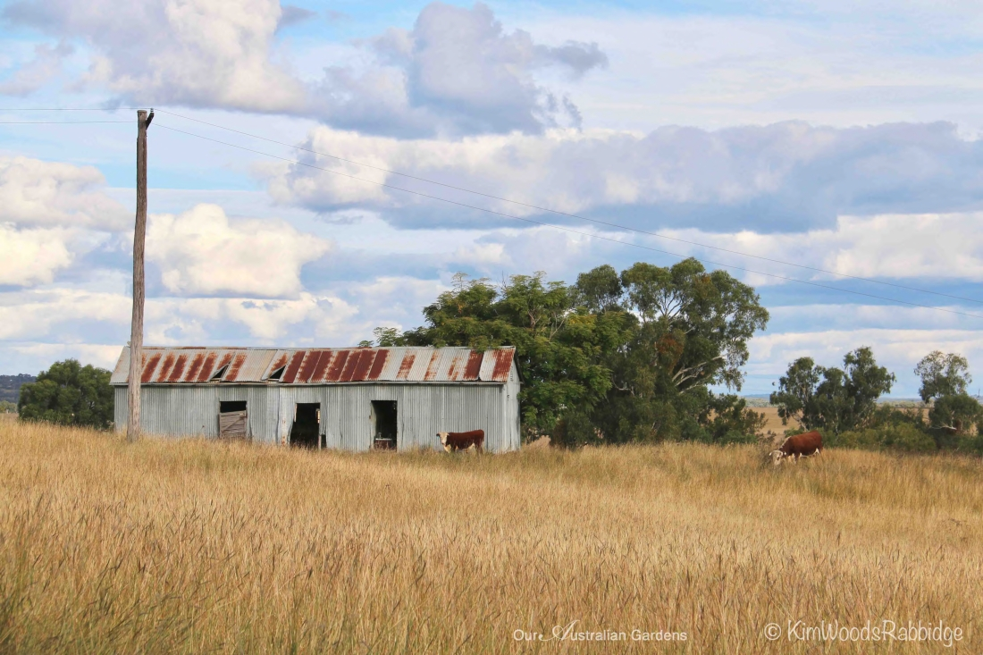 Byron shed ©Kim Woods Rabbidge