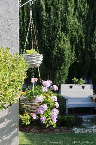 Ivy geranium loves its sunny spot.
