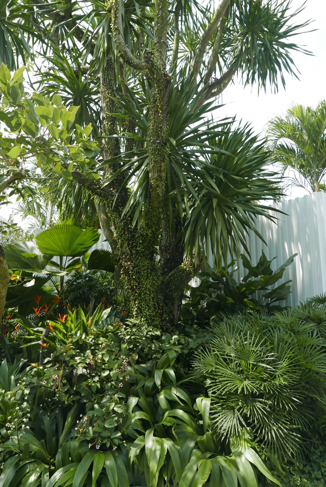 Verdant layers of ferns, tropical bulbs, palms and dracaena.